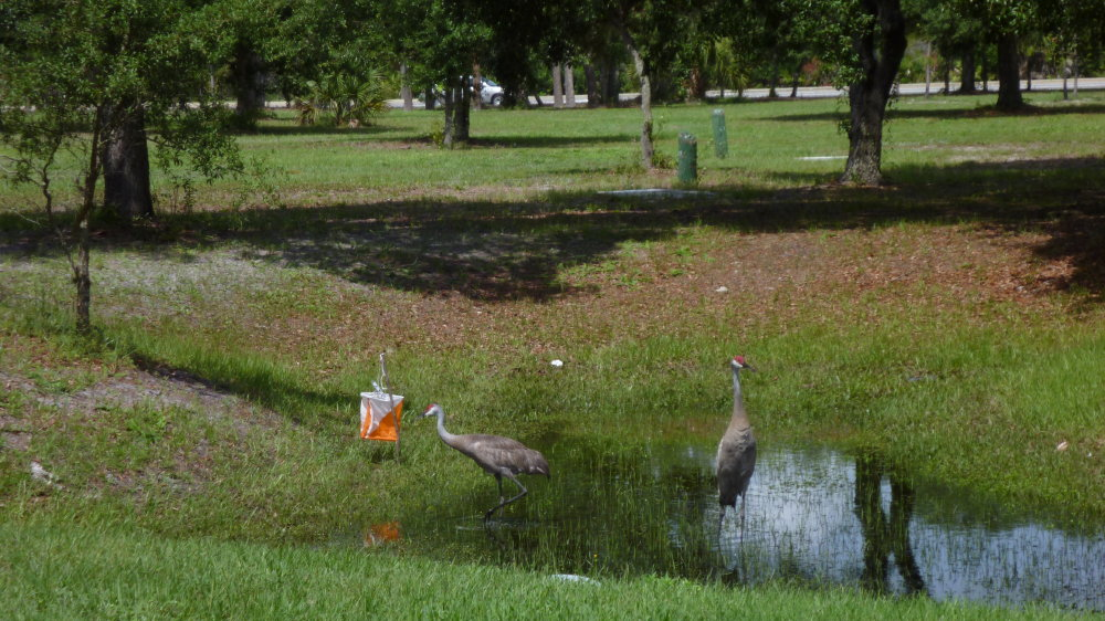 Redhead heron from Florida orienteering